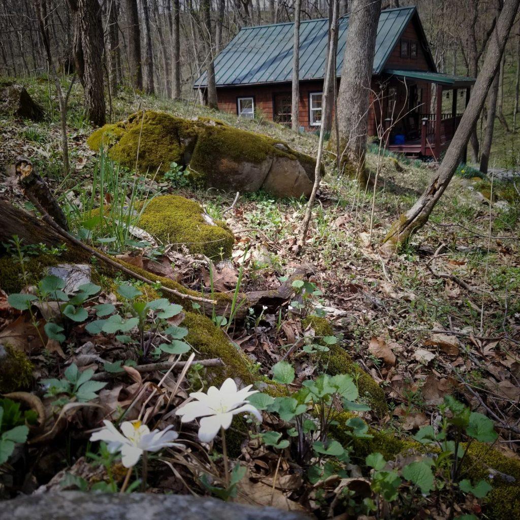 Knott Cabin, spring